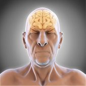 stock photo of male body anatomy  - Elderly Male Brain Anatomy Illustration - JPG