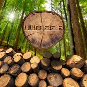 image of cutting trees  - Trunks of trees cut and stacked and wooden sign section of tree trunk with text lumber hanging with metal chain - JPG