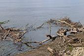 foto of serbia  - Beautiful Danube in Kostolac in Serbia in sun day - JPG