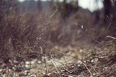stock photo of dry grass  - Autumn Dry grass - JPG