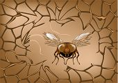 image of blowfly  - abstract brown net with fly - JPG