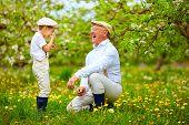 picture of grandpa  - happy grandpa with grandson blowing dandelions in spring garden - JPG
