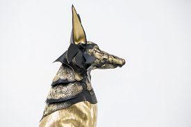 pic of jackal  - sculpture of the Egyptian god Anubis - JPG