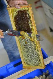 foto of scrape  - Female beekeeper in workshop scraping honeycomb frame. ** Note: Soft Focus at 100%, best at smaller sizes - JPG