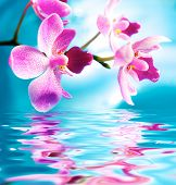 foto of beautiful flower  - Picture of a beautiful orchid flowers reflected in water - JPG