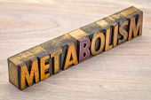 metabolism - word abstract in vintage letterpress wood type printing blocks poster