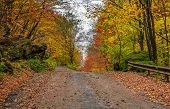 Road Uphill In  Autumn Forest On Overcast Day poster