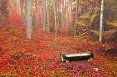 autumn poster