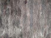 picture of villi  - The photo of mink fur texture closeup - JPG