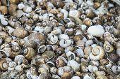 Many Dead Shells, Cherry Shells, Fossil Shells poster