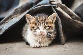 A Stray Kitten Hides Under The Rubbish Dump poster
