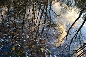 Sky Reflection In The Lake. Tree Trunks Reflected In The Water Full Of Fallen Leaves. Autumn Season  poster
