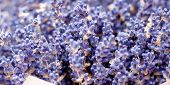 Bouquet Of Dry Lavender For Aromatherapy poster