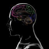 foto of temporal lobe  - 3D Render - JPG