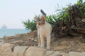 Portrait Of A Multi Colored Stray Cat With Green Eyes Standng On The Ground By The Seaside poster