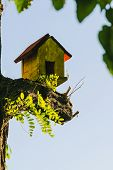 Close Up Of A Bird House In Nature. Amazing Nature. Close Up Of A Bird House In Nature. Bird House.  poster