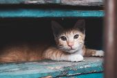 Stray Kitten,cat In The City, Abandonment And Help Animal Concept poster