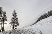 Winter Landscape. Tall Pine Tree Alone On Mountain Slope On Cold Sunny Day On Copy Space Background  poster