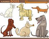 Purebred Dogs Cartoon Set poster