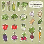 Hand-drawn collection of icons vegetables, vector illustration in vintage style.