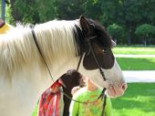 image of troika  - black and white horse head profile with child on background - JPG