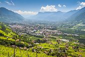 image of south tyrol  - View to Merano South Tirol with mountains and wine branches - JPG