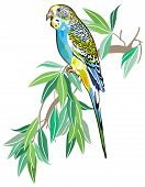 stock photo of parakeet  - budgerigar australian parakeet isolated on white background - JPG