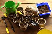image of pot plant  - preparation for planting - JPG
