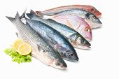 pic of saltwater fish  - Fresh catch of fish isolated on white background