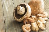 stock photo of portobello mushroom  - A group of assorted mushrooms including portobello shiitake and oyster mushrooms - JPG