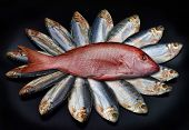 stock photo of red snapper  - Large red snapper with a group of mackerel fish - JPG