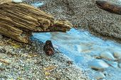 stock photo of driftwood  - Driftwood, sand and pebbles on the beach