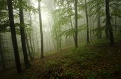 stock photo of ethereal  - Ethereal green forest with fog after rain