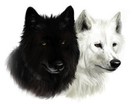 picture of white wolf  - Realistic portrait of two wolves black and white - JPG