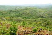 image of deforestation  - Deforestation  - JPG