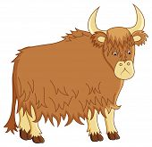 picture of yaks  - funny image of yak on isolated background - JPG