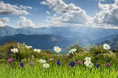 picture of garden eden  - Summer landscape with beautiful flowers and mountain - JPG