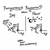picture of respiration  - Photosynthesis versus respiration as quick handwritten sketch - JPG