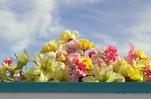picture of wispy  - Beautiful fake flowers in soft pastel colors fill window box against a blue sky with wispy clouds in mid afternoon - JPG