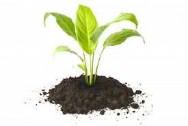 stock photo of humus  -  plant tree growing seedling in soil isolated on white background  - JPG
