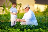 foto of grandpa  - grandpa explains to curious grandson the nature of plant growth - JPG