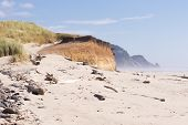 picture of dune grass  - The essence of the Oregon coast with grass - JPG