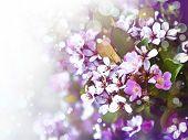 picture of tree-flower  - Beautiful spring tree flowers - JPG