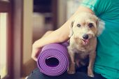 image of yoga mat  - woman holding dog and yoga mat in gyms - JPG