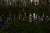 foto of flood-lights  - Sunrise in the spring in the forest edge on the river in flood sunlight reflected in the water - JPG