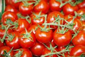 stock photo of stall  - Group of freshly picked tomatoes on market stall - JPG