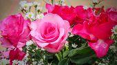 pic of rose close up  - Close - JPG