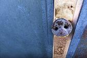 pic of animal nose  - Farm animals - JPG