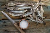 picture of caught  - Freshly caught small fish - JPG