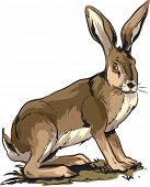 pic of wild-rabbit  - Vector cartoon illustration of wild rabbit  - JPG
